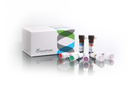 GeneFinder™ HPV PCR Kit